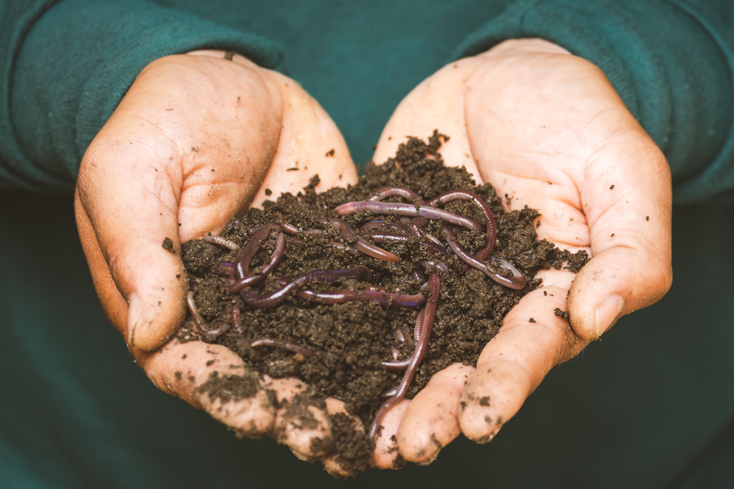 compost analysis